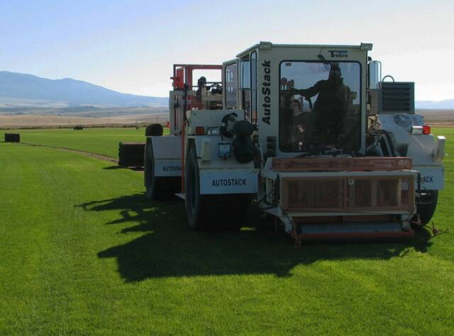 cutting bluegrass sod
